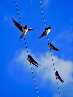 swallows-2798376__340