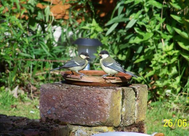 birds drinking