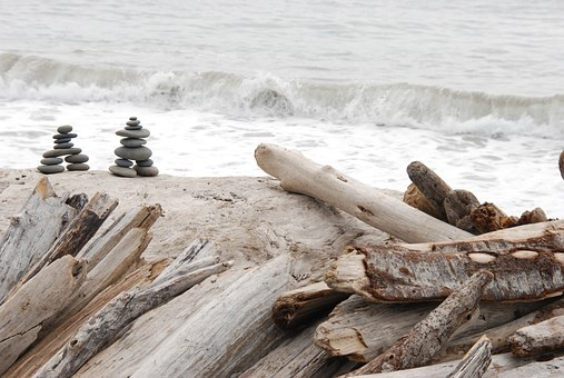 nature-1367682__340 driftwood
