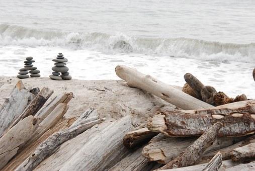 nature-1367682__340 driftwood