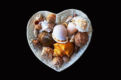 sea-shells-1465154__340