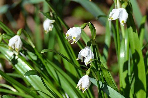 spring-flowers-1787631__340