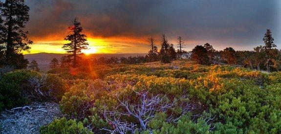 sunrise-1949939__340 trees